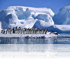 Penguins 1 (10)