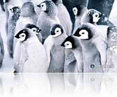 Penguins 1 (9)
